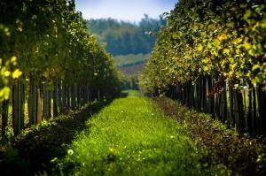 vineyard-998487_640