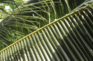 palm-1000982_1280