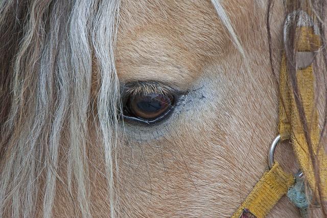 bridled horse sad