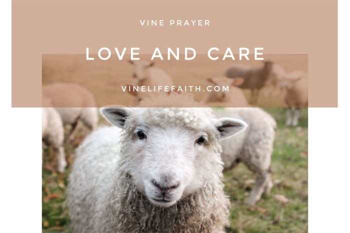 Pray God's Word to Meditate on Your Shepherd's Love and Care